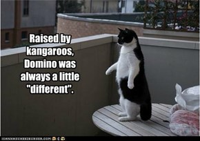 Raised by kangaroos,