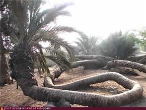 Palmsnake