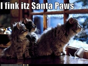 I fink itz Santa Paws