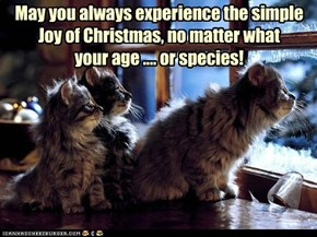 The Joy of Innocence at Christmas