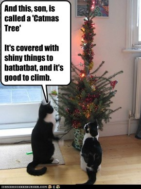 And this, son, is called a 'Catmas Tree'It's covered with shiny things to batbatbat, and it's good to climb.