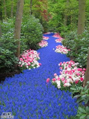 Mother Nature FTW: River of Flowers