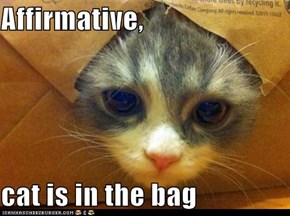 Affirmative,  cat is in the bag
