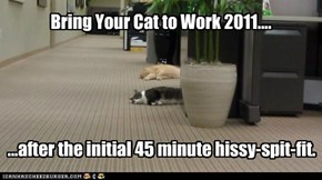 Bring Your Cat to Work 2011....