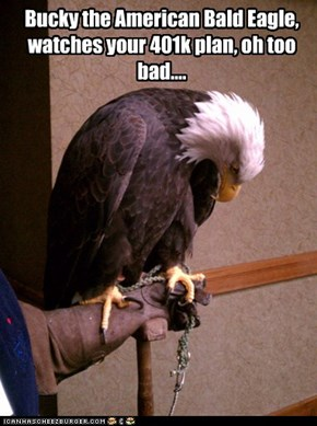 Bucky the American Bald Eagle, watches your 401k plan, oh too bad....