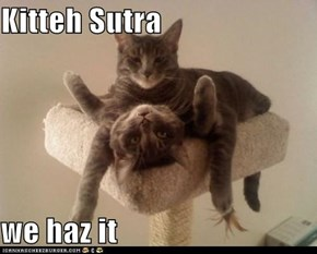 Kitteh Sutra