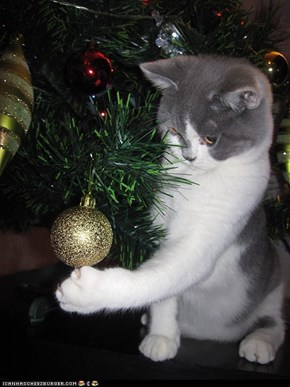 Advent Kitteh of teh Day: Your Ornaments Won't Know What Hit Them