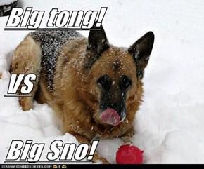 Big tong! VS Big Sno!