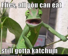 Flies, all you can eat  still gotta katchum