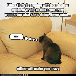 Either Fluffy is arguing witb her shadow again, or trying to make you crazy wondering what she's doing. Never mind....