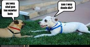 Desprite Dogs