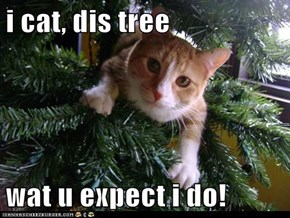 i cat, dis tree  wat u expect i do!