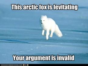 This arctic fox is levitating