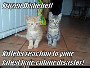 Frozen Disbelief!  Kittehs reaction to your latest hair-colour disaster!