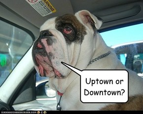 Uptown or Downtown?