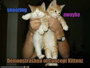 Demonstrashun of Concept Kittenz