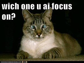wich one u ai focus on?
