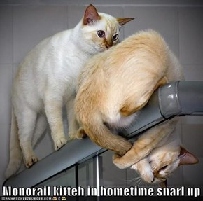 Monorail kitteh in hometime snarl up
