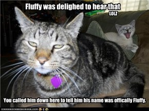 Fluffy iz deelited