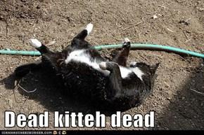 Dead kitteh dead