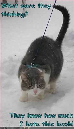 What were they thinking?   They know how much I hate this leash!