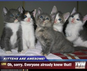 KITTEHS ARE AWESOME! - Oh, sorry. Everyone already knew that!