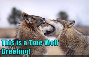 This is a True Wolf Greeting!