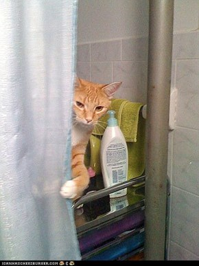 Around the Interwebs: Rub-a-Dub-Dub!  13 Photos of Pets in the Tub!