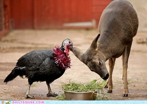 A Very Vegetarian Thanksgiving