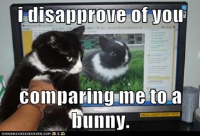 i disapprove of you  comparing me to a bunny.