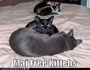 Mai Free Kittehs