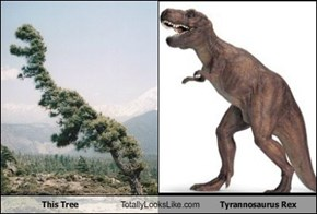 This Tree Totally Looks Like Tyrannosaurus Rex