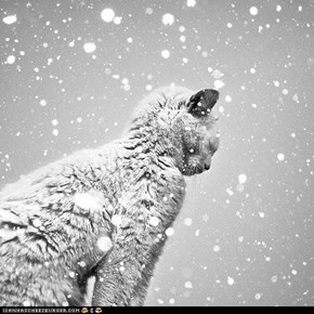 Advent Kitteh of teh Day: Let It Snow, Let It Snow, Let It Snow!