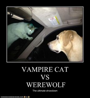 VAMPIRE CAT  VS  WEREWOLF