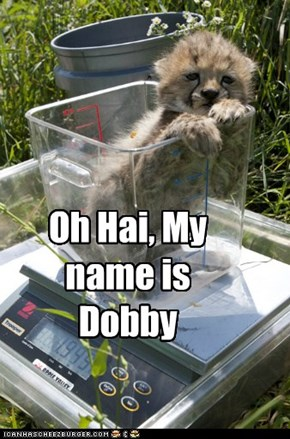 Oh Hai, My name is Dobby