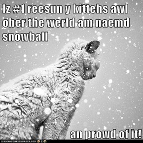 Iz #1 reesun y kittehs awl ober the werld am naemd snowball  an prowd of it!