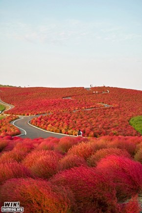 WIN!: Mother Nature FTW: Kochia Hill