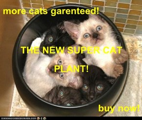 more cats garenteed! THE NEW SUPER CAT PLANT! buy now!