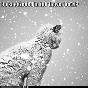 Hu sneezeded in teh flower bowl?