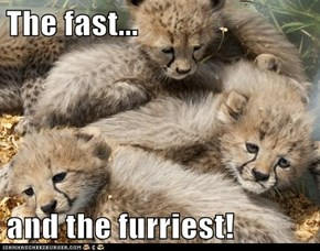 The fast...  and the furriest!