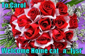 To Carol  Welcome Home cat_a_lyst'