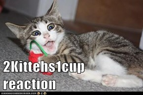 2 Kittehs 1 Cup Reactions