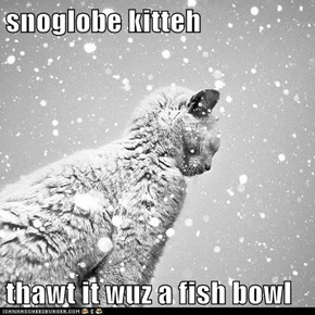 snoglobe kitteh  thawt it wuz a fish bowl
