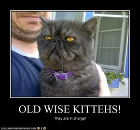 OLD WISE KITTEHS!