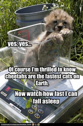 Faster than a speeding nap!