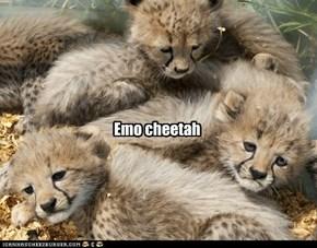 Emo cheetah