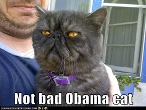 Not bad Obama cat