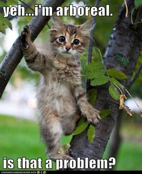 Cute Kitten Livin' in a Tree!