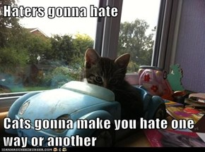 Haters gonna hate  Cats gonna make you hate one way or another