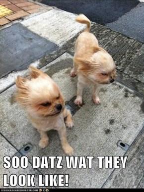 SOO DATZ WAT THEY LOOK LIKE!